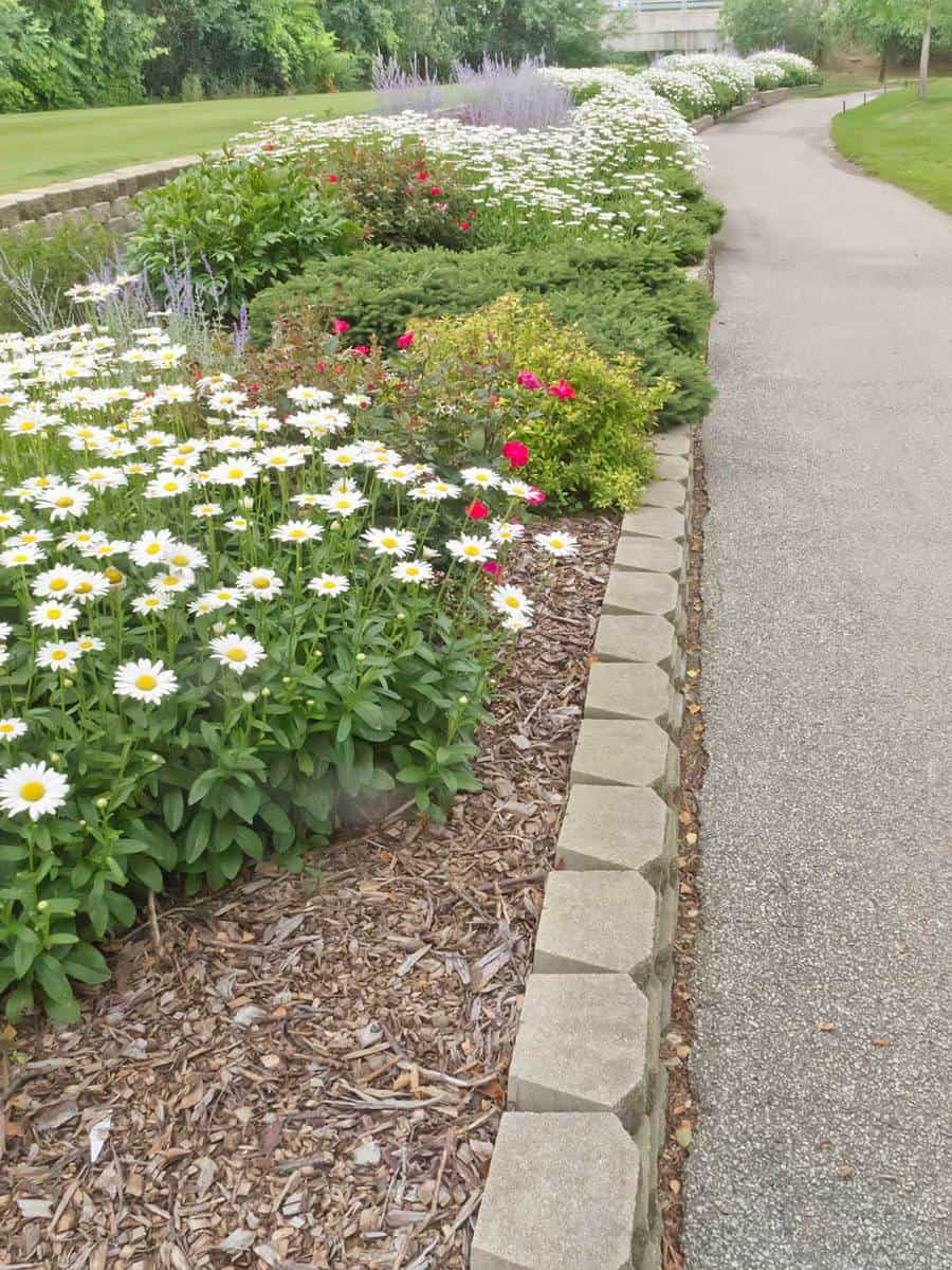 Long flowerbed along cart path on golf course