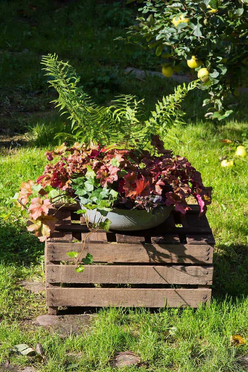 Perennial autum plants in old washbowl on a wooden box