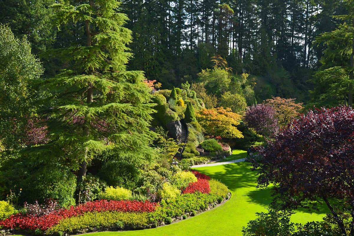 Pine garden with mix of evergreen shrubs, annuals and perennial flowers in a beautiful national park
