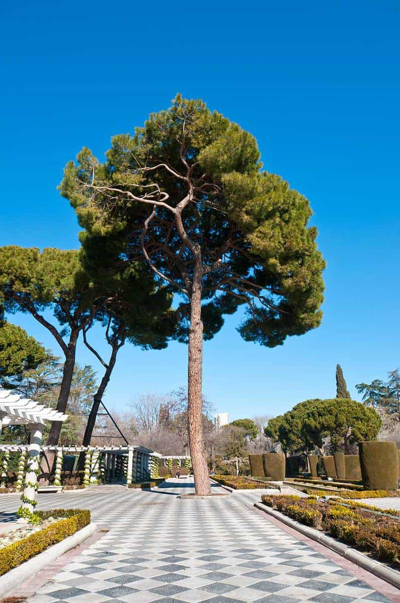 Pine tree and pergolas in retro park garden in Madrid