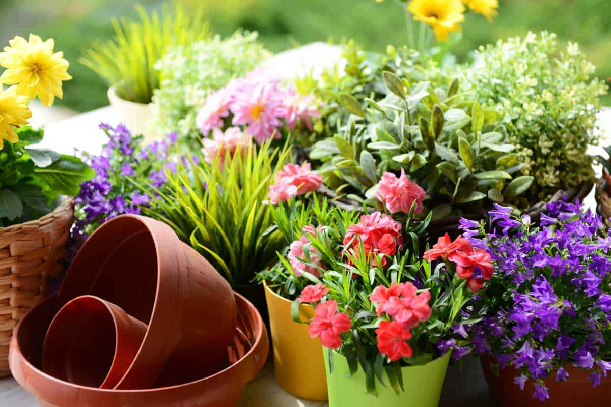 Potted-plants-in-the-garden