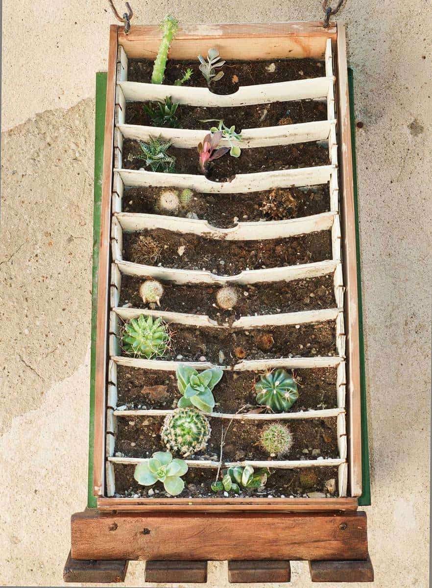 Rack with several small succulent plants