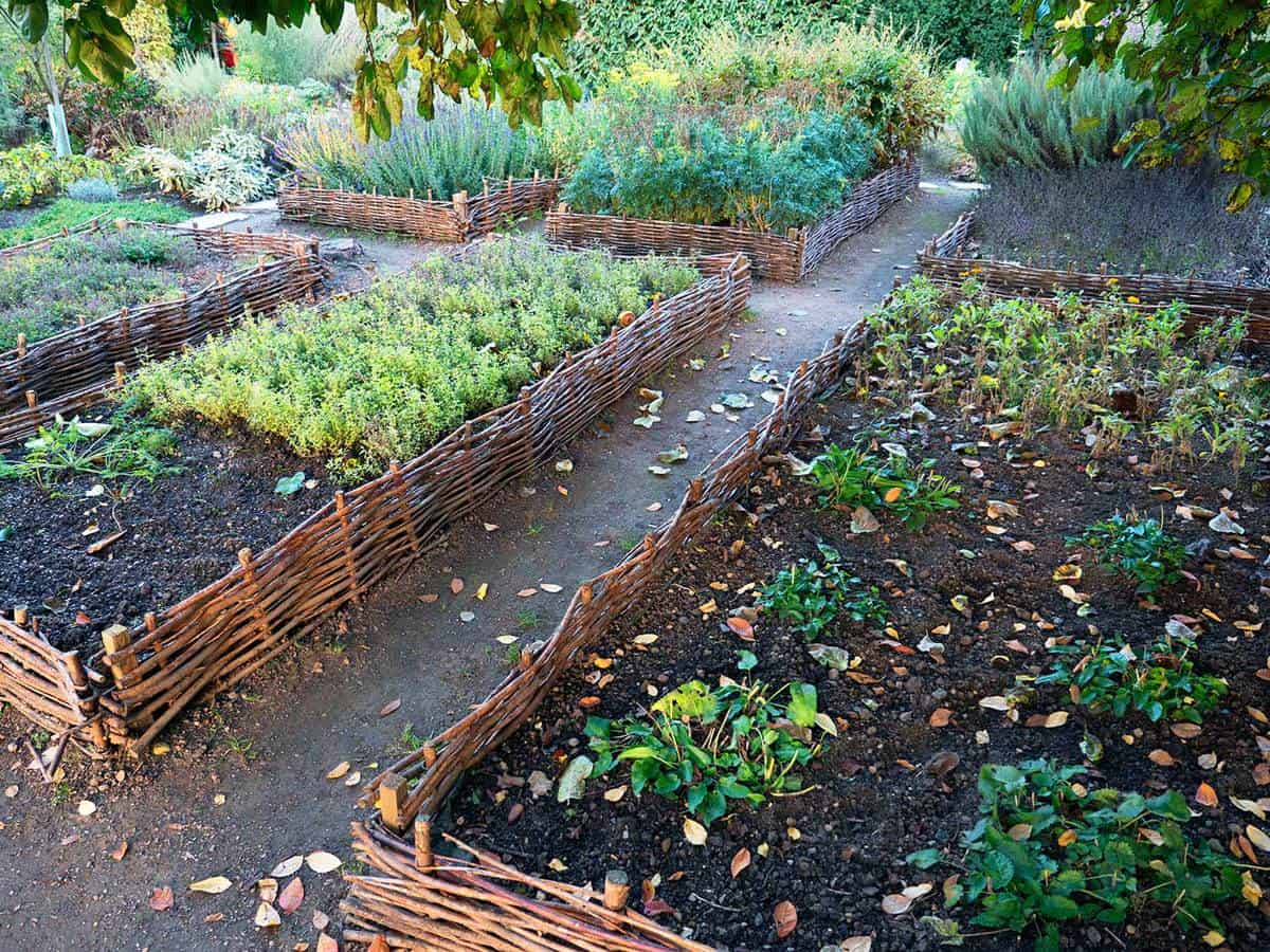 Raised beds in a garden full of plants and vegetables