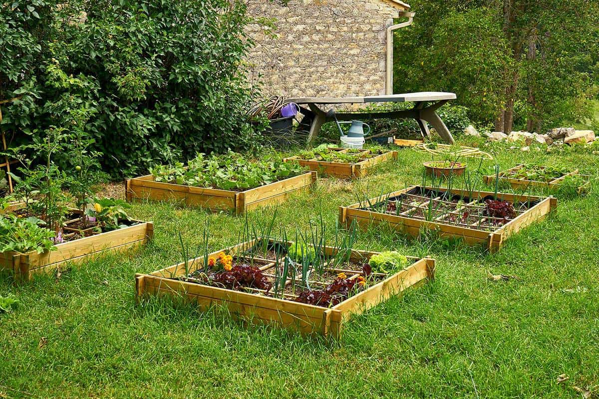 Raised beds with vegetables in an organic garden