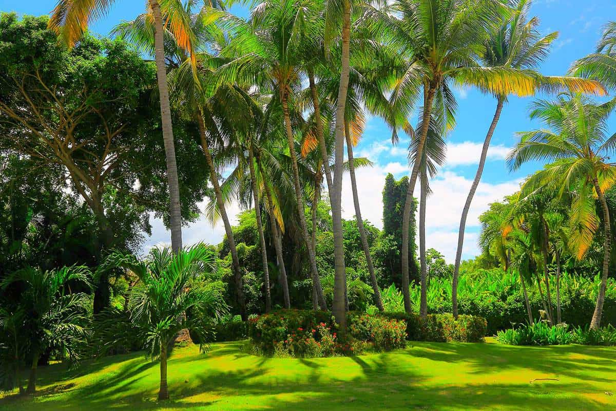 Tropical garden paradise with green coconut palm trees foliage