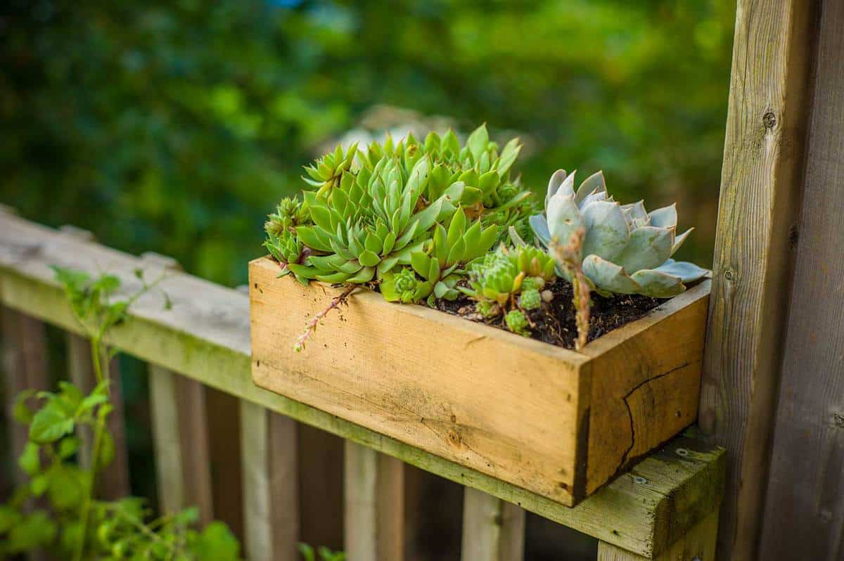 Wooden planter with succulents in home garden