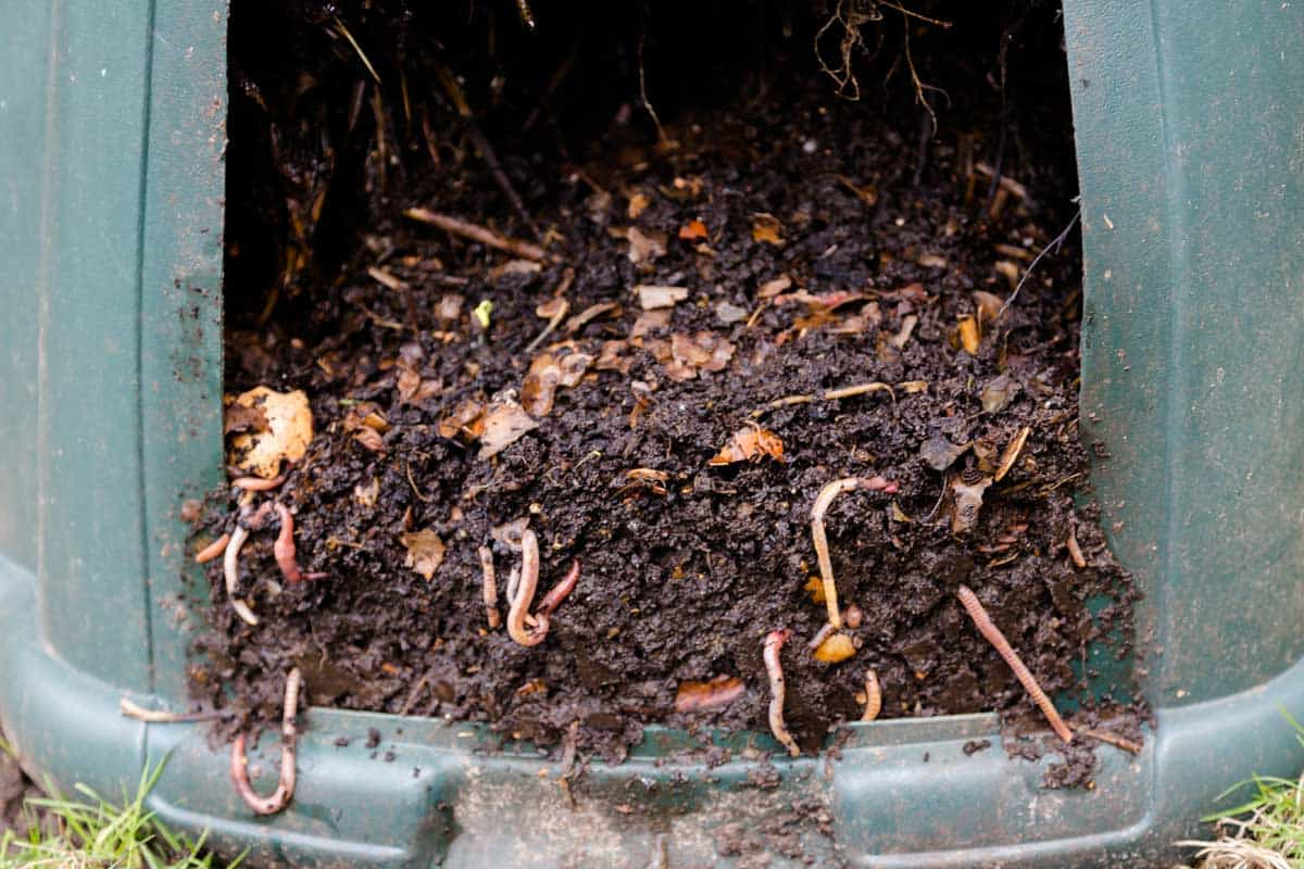 Worms in compost bin with plant roots