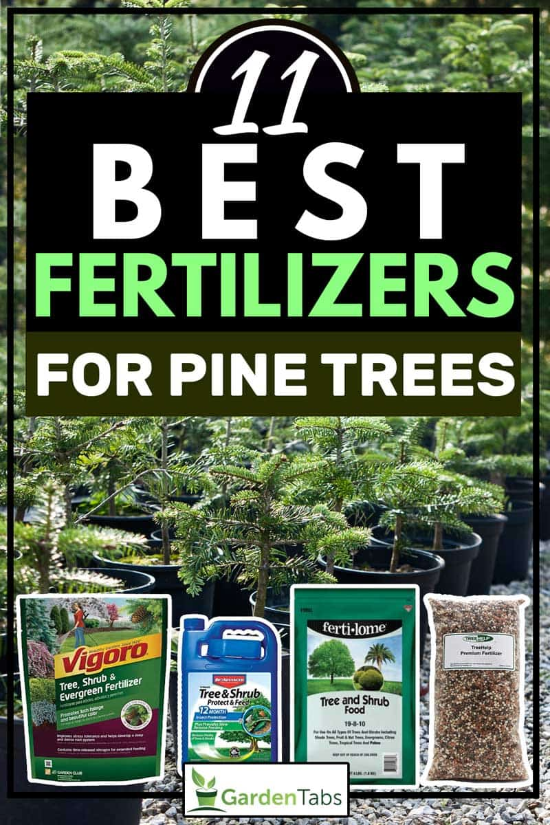 Four kinds of fertilizers with potted pine trees on the background, 11 Best Fertilizers For Pine Trees