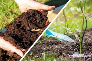 Compost vs. Fertilizer – What's The Difference?