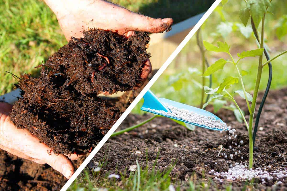 Compost vs. Fertilizer - What's The Difference? - Garden Tabs