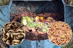 Grubs or Maggots in Compost – What to Do?