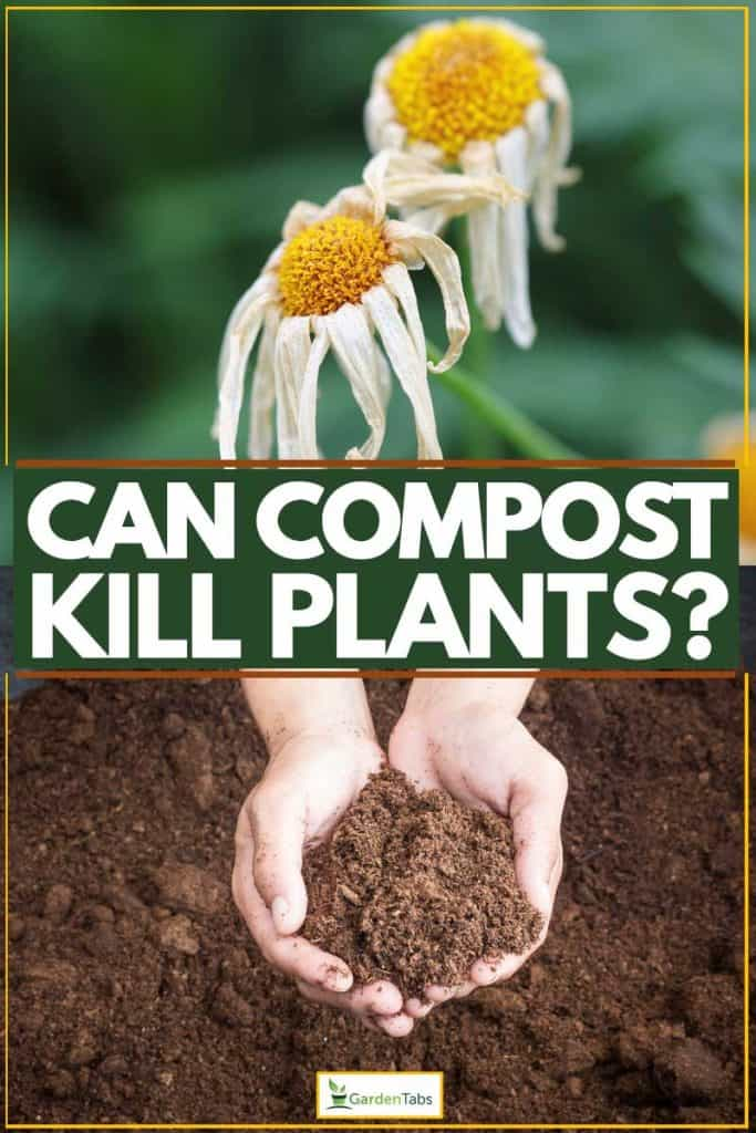 Dying plant and composted soil held by gardener
