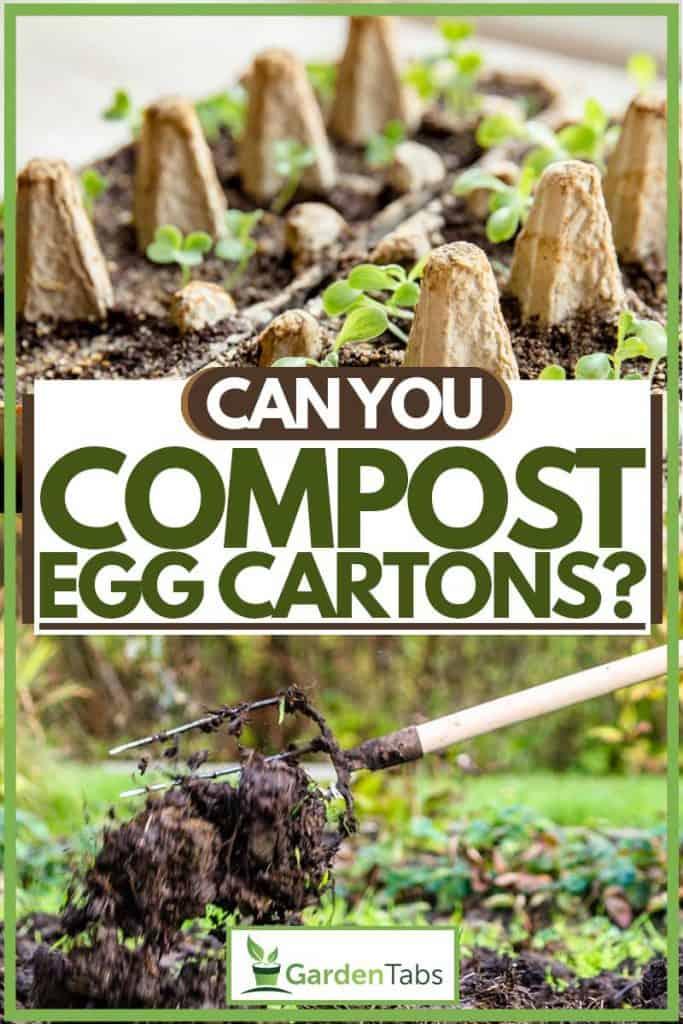 Egg carton used as nursery for small plants and for compost for plants, Can You Compost Egg Cartons?
