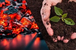 Burning coal and composted soil with small plant