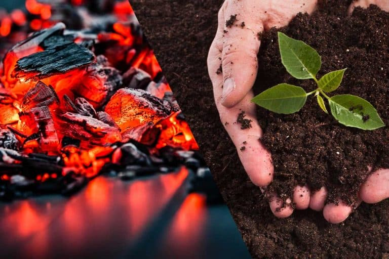 Can You Put Coal Ash In Compost?