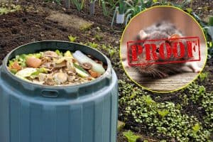 10 Rat-Proof Composters You Should Check Out
