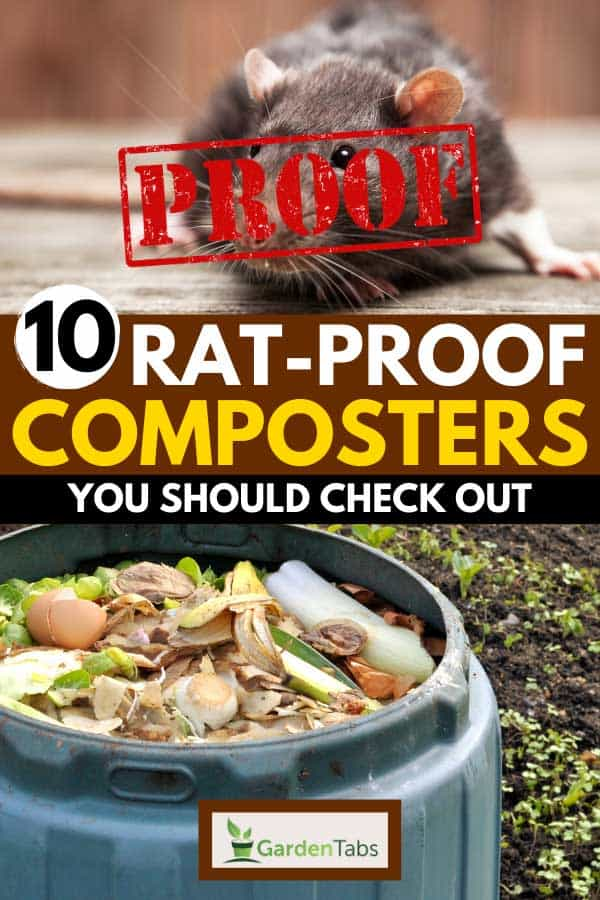 Collage of a rat and a garden compost bin full of kitchen food and garden waste