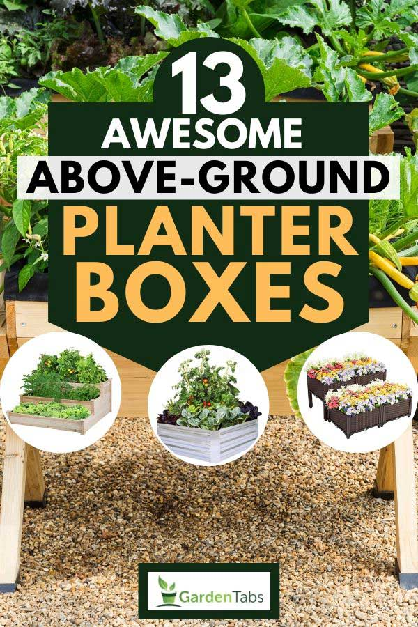 Collage of above-ground planter boxes with growing vegetables on a planter box on the background