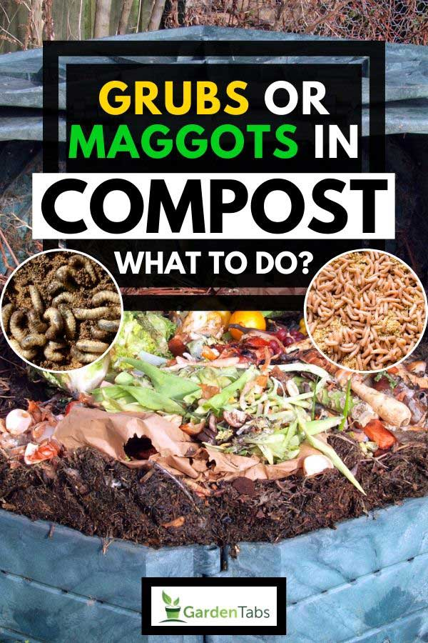 Collage of worms and maggots with compost bin on the background