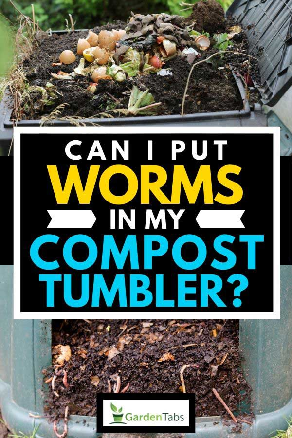 Compost tumbler with worms, Can I Put Worms In My Compost Tumbler?