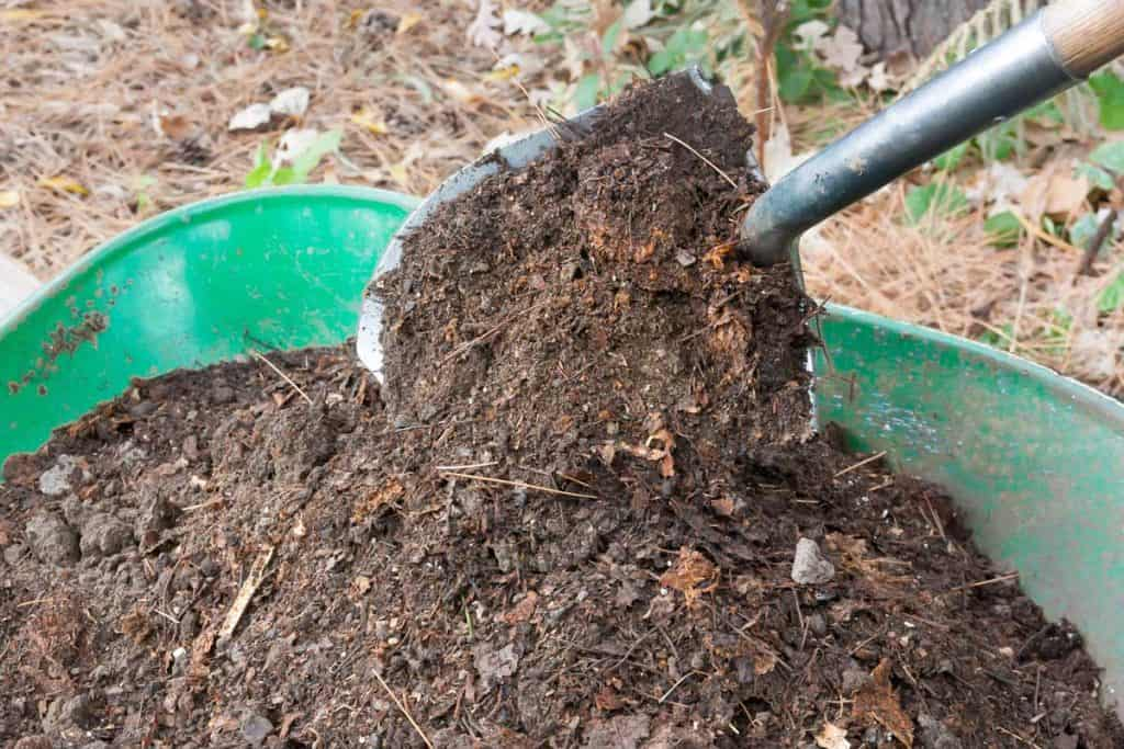 Compost inside wheel barrow and hauled by shovel