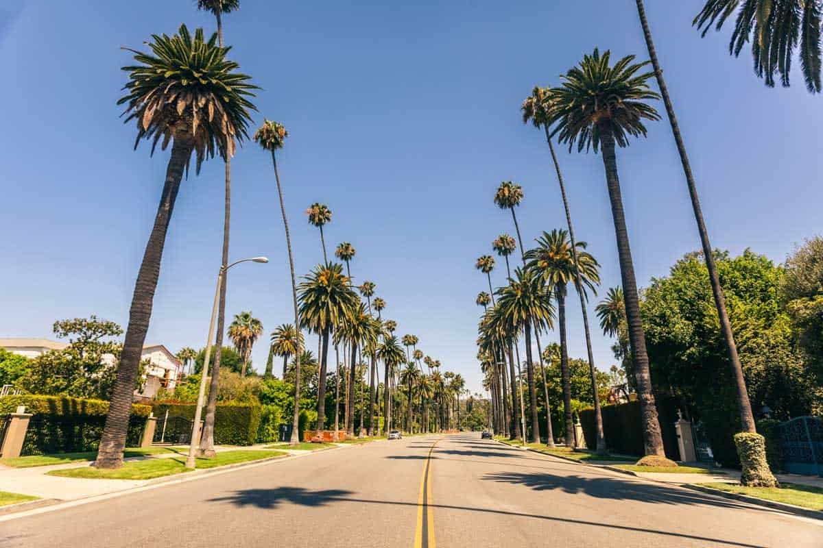 Famous Beverly hills palms in a sunny day