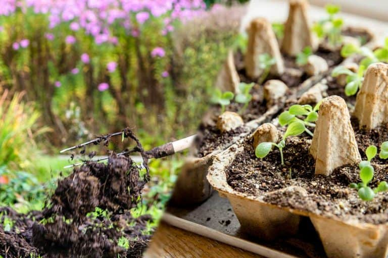 Can You Compost Egg Cartons?