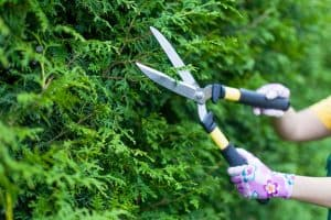 Best Long-Handled Garden Shears [12 Shopping Suggestions]