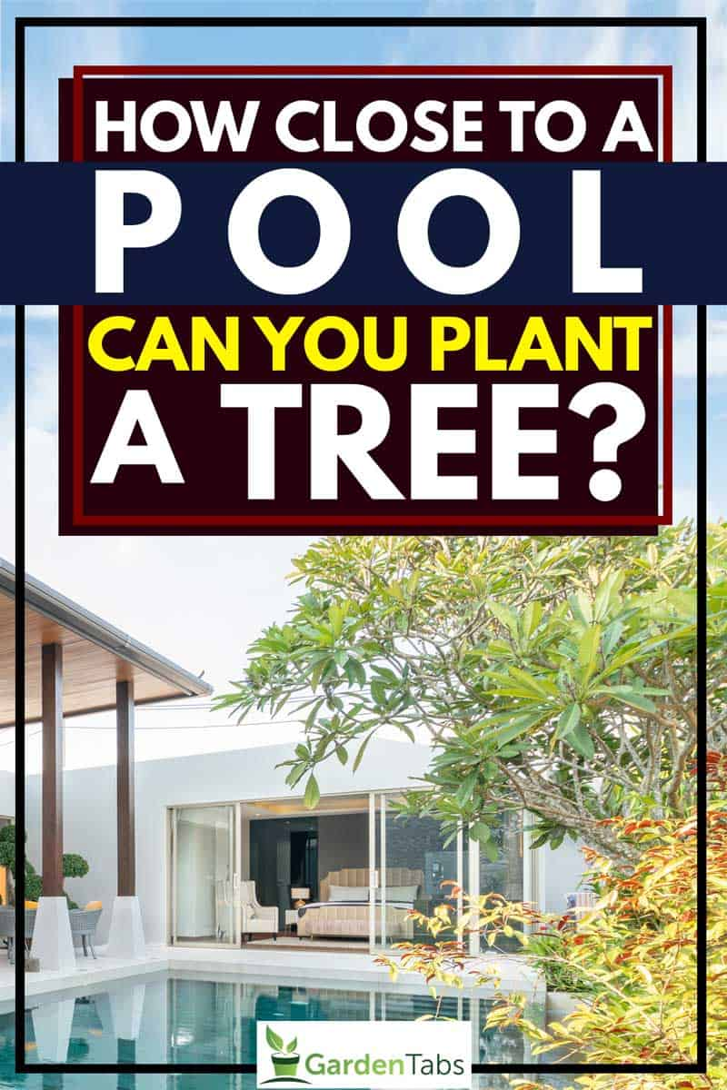 How Close to a Pool Can You Plant a Tree