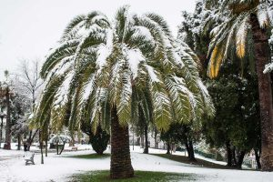 Can Palm Trees Survive Snow? [The answer may surprise you!]