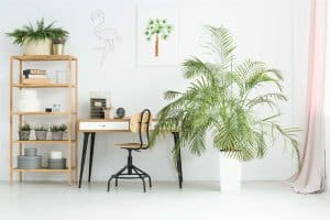 The Majesty Palm Care Guide (Inc. Indoor and Outdoor)