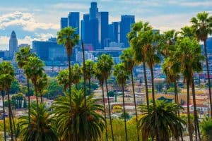 Lush vivid green palm trees with view of Downtown Los Angeles on the background, How To Care For Palm Trees in California