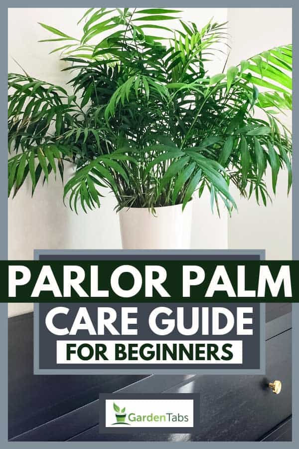 Parlor palm plant decorating a black wooden dresser in a modern home