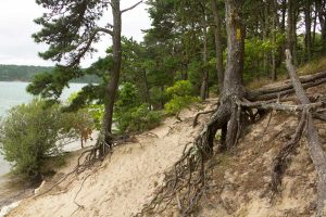 How Do You Stop Pine Tree Roots From Growing? [5 Actionable Solutions]
