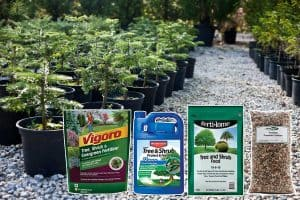 11 Best Fertilizers For Pine Trees