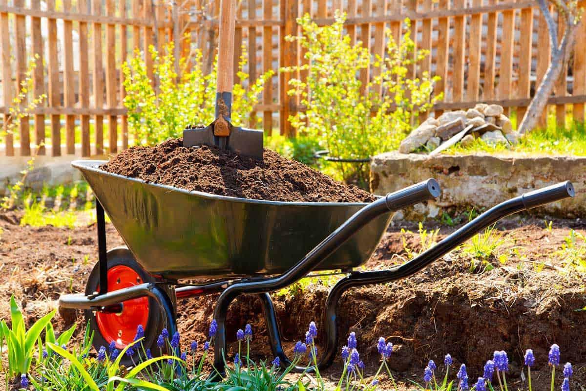 Wheelbarrow full of compost soil in a garden