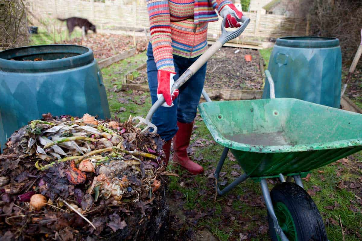 Woman gardener turning compost, putting the undecomposed food waste back into a composting bin