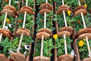 Wooden decorative planter boxes with annuals