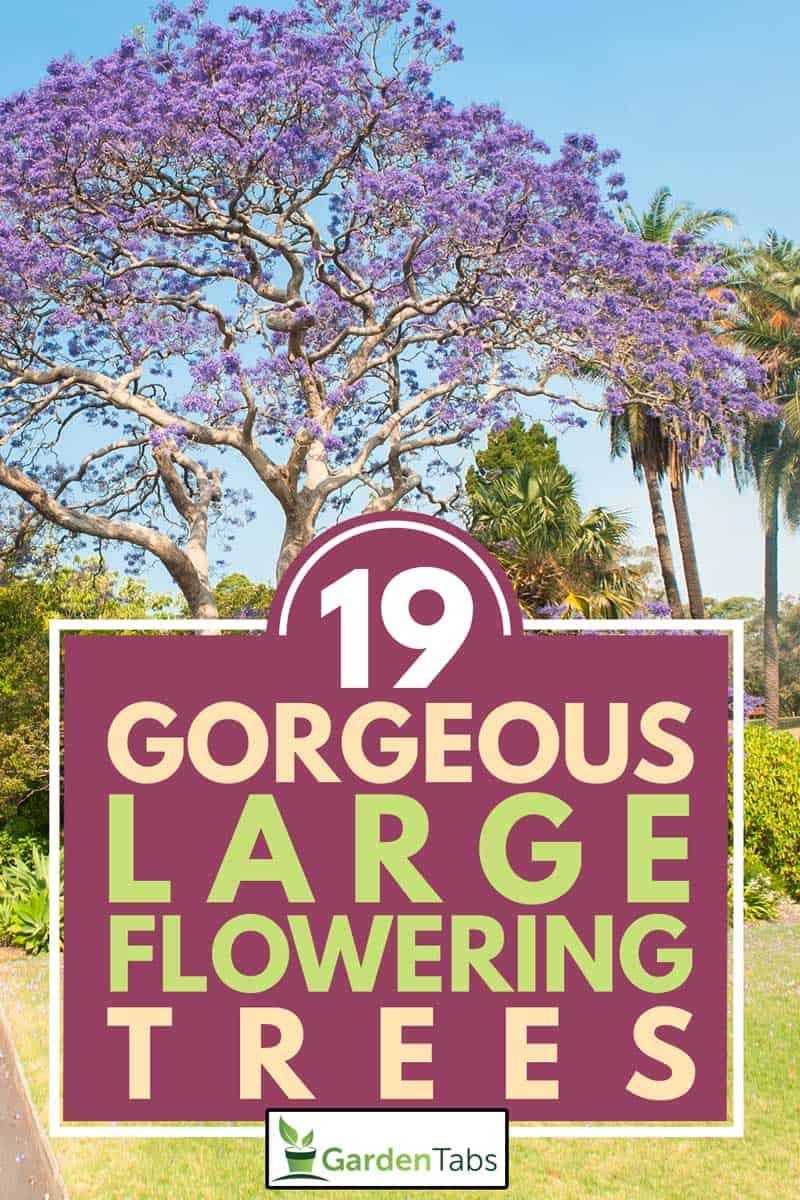 Blooming jacaranda tree in the park, 19 Gorgeous Large Flowering Trees