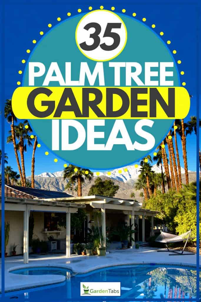 35 Palm tree garden ideas