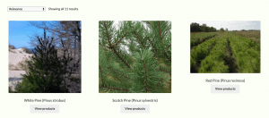 Cold Stream Farm website product page for pine trees