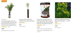 Amazon website product page for pine trees
