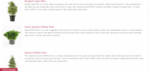 Bower and Branch website product page for pine trees