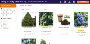 Brighter Blooms website product page for pine trees
