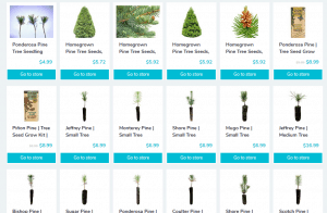 Discount99 website product page for pine trees