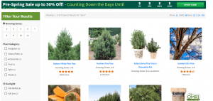 Fast Growing Trees website product page for pine trees