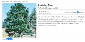 Guyney's website product page for pine trees