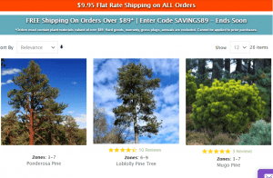 Nature Hills website product page for pine trees