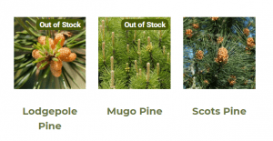 Silent Seedling Nursery website product page for pine trees