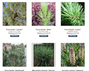 Sooner Plant Farm website product page for pine trees